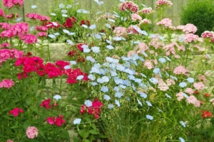garden-flowers-1123456_960_720